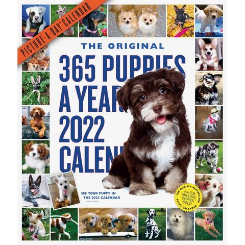 365 Puppies-A-Year 2022 Picture-A-Day Wall Calendar